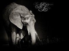 Mothers Love  By   Marie Warwick  of  Marielianne Photography