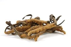 Cordyceps is a genus of fungi that may have anti-aging and exercise performance benefits, among several others. This article discusses 6 science-based benefits of cordyceps. Natural Male Enhancement Pills, Blood Pressure Remedies, Traditional Chinese Medicine, Improve Blood Circulation, Reducing High Blood Pressure, How To Increase Energy, Bhutan, Herbal Remedies, Ayurveda