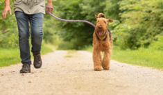 We have lots of lovely walks from and near Pillows and Paws cottages in Devon. North Cornwall, Devon And Cornwall, Castle Drogo, Devon Cottages, South West Coast Path, Rock Pools, Dartmoor, Old Games, Nature Reserve