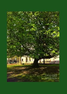 The Chestnut Tree at Christchurch Greeting Card