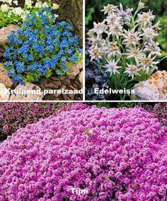 13 bodembedekkers in 3 verschillende soorten (3 kruipend parelzaad, 5 tijm en 5 Edelweiss)