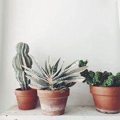 / terracotta pots