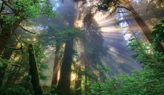 KMcNeal_Redwoods_445.jpg