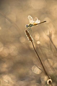 Sous une lumière de début de soirée… | Flickr - Photo Sharing!