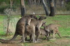 Funny pictures about Meanwhile in Australia. Oh, and cool pics about Meanwhile in Australia. Also, Meanwhile in Australia. Happy Australia Day, Australia Funny, Images Gif, Funny Images, Funny Pictures, Crazy Pictures, Meanwhile In Australia, Funny Animals, Cute Animals