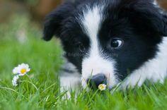 i see u flower