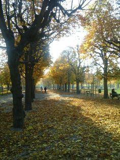 Sidewalk, Vienna, Plants, Walkway, Flora, Plant, Walkways, Planting