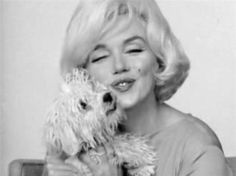 "Marilyn Monroe with her dog ""Maf, given to her by Frank Sinatra.."
