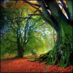 Floresta Negra, Alemanha