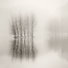 ideas landscape trees photography mists for 2019 B&w Wallpaper, Landscape Photography, Nature Photography, Belle Photo, Black And White Photography, Mists, Scenery, Beautiful Pictures, Artwork