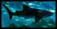#Holbox #Mexique. Requin baleine.