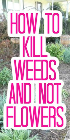 How to Kill Weeds and Not Flowers#flowers #kill #weeds Garden Crafts, Garden Projects, Diy Projects, How To Kill Grass, Killing Weeds, Weed Killer Homemade, Weed Spray, Starting A Garden, Seed Starting