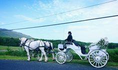 Shenandoah Carriage Company