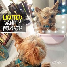 Theodore loves his Lighted Vanity Mirror