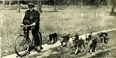 Airedales In Training: squad and platoon dogs and guard duty in the infantry. The Red Army / USSR / c.1927