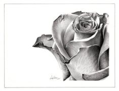 Rose Drawing and Paintings: In the earlier post we have shown you some beautiful Flower drawings, now in this post we have included some 25 Beautiful Rose drawi Beautiful Rose Drawing, Beautiful Pencil Sketches, Flower Sketches, Drawing Sketches, Art Drawings, Rose Pencil Sketch, Rose Sketch, Sketching, Rose Drawings