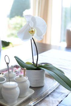 This white orchid was a sweet gift from my mom & adds the perfect spring touch to the table.