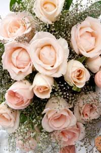 Peach roses... So soft I want to touch them