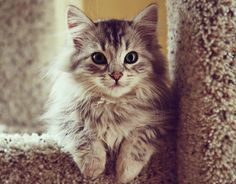 I am most definitely a dog person, but a cute kitty like this just warms my heart!