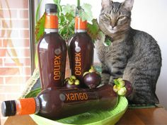 """In no way do we claim that Xango will cure anything, but we do say """"have a look at the research, the studies, the stories and if it makes sense for you to take a proactive, rather than reactive approach to your family's health, we highly recommend Xango Wine Rack, Whiskey Bottle, You Got This, Health Care, The Cure, Juice, Fresh, Instagram, Products"""