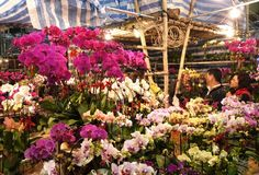 the hong kong flower market is a unique specialty shopping market