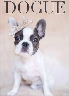 French Bulldog Princesses first 'Dogue' Cover.