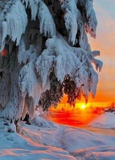 Art Photography Portrait, Winter Photography, Nature Photography, Beautiful Photos Of Nature, Amazing Nature, Beautiful World, Winter Sunset, Winter Scenery, Winter Pictures