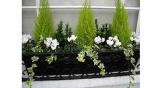 Winter window box - could do this with my little conifer that needs repotting an. - Winter window box – could do this with my little conifer that needs repotting anyway -
