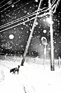 Hajime Kimura :: from 'Man and Dog' series