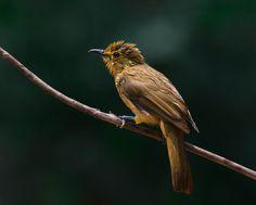 Fotostream di Rajesh@Nikon