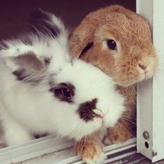 Rambo and Eddy!!! Check out bunnymama on Instagram!