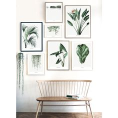 Trouva: Urban Botanics: Howea Art Print - 50 X 70cm