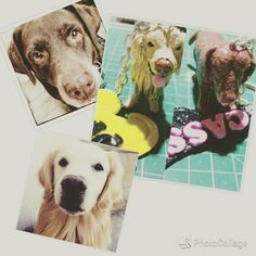 Handcrafted and customized clay pet replicas keychains :) #artcraftedpets #ivonneramoscreations