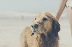 sandy dog : from bloom