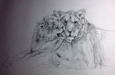 Dibujo a grafito de una pareja de leones  por Francisco Javier Abellán