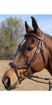 Shop for anatomic design of the Nunn Finer Innovativo English Bridle at Bit of Britain. The Innovativo bridle is crafted from Italian leather and relieves pressure to sensitive areas of horse's head. Italian Leather, Britain, Pony, Shapes, Horses, Fashion Statements, Animals, Beautiful, Memes