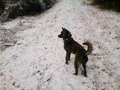 #snow #dog
