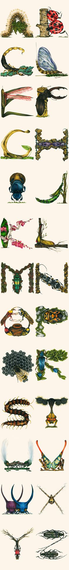 Amazingly detailed alphabet composed of drawings of bugs
