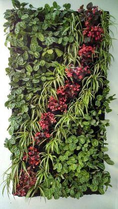 61 New Ideas house green wall plants - Jardin Vertical Fachada Balcony Garden, Herb Garden, Indoor Garden, Vegetable Garden, Garden Plants, Indoor Plants, House Plants, Garden Kids, Pot Plants