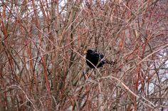 Portfolio Multimedeia: Irwikissa puussa istui ja houkutteli kahvilaan