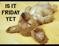 puppy quotes funny -Is it Friday yet??That is totally me...