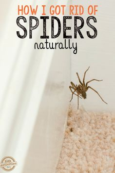 Natural Spider Repellent- drops of peppermint essential oil into a 2 oz. Spray bottle with water, spray around house just like you would with insecticide. Only repels spiders, does not kill them. Cleaning Solutions, Cleaning Hacks, Pest Solutions, Natural Spider Repellant, Get Rid Of Spiders, How To Repel Spiders, Keep Spiders Away, Just In Case, Just For You