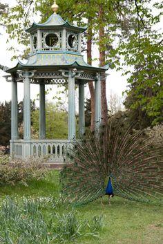 Peacock at Parc de Bagatelle, Bois de Boulogne
