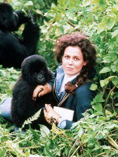gorillas_in_mist_1988_2jpg.jpg (900×1200)