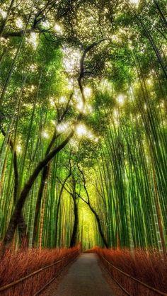 The Bamboo Way