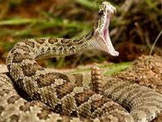 سانپ کے ساتھ سیلفی کے شوق میں امریکی شہری کو اسپتال کا ڈیڑھ لاکھ ڈالرکا بل دینا پڑگیا – ایکسپریس اردو