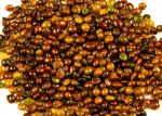 Las semillas de la planta de tinte | colorantes naturales salvaje Colores