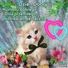 Good Night, Good Morning, Cat Gif, Teddy Bear, Humor, Cats, Memes, Funny, Animals