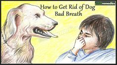 Bad dog breath dog breath and home remedies on pinterest