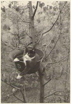 Cat in helmet, 1944